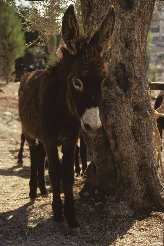 Balaam and the talking donkey commentary